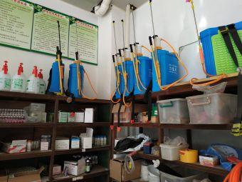 青龙种子店