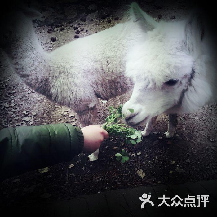 武汉九峰森林动物园图片 - 第3张