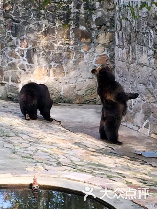 上海动物园-黑熊图片-上海景点-大众点评网