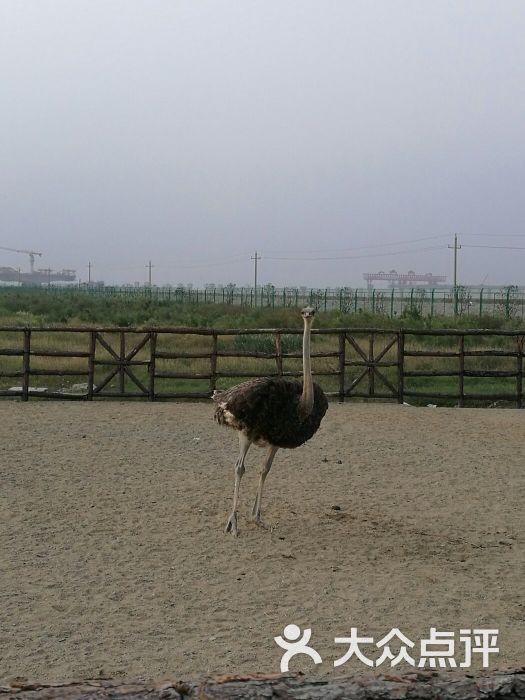 台州湾野生动物园图片 - 第11张