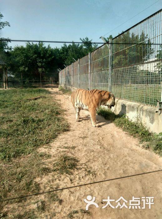 东莞寮步香市动物园图片 - 第5张