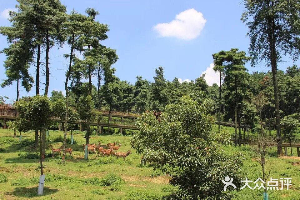 贵阳森林野生动物园图片 - 第81张