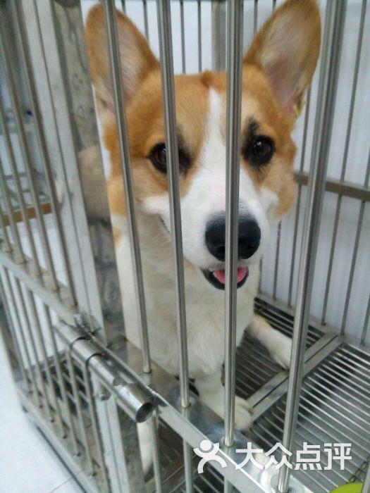 台湾华懋动物诊所-图片-广州宠物-大众点评网