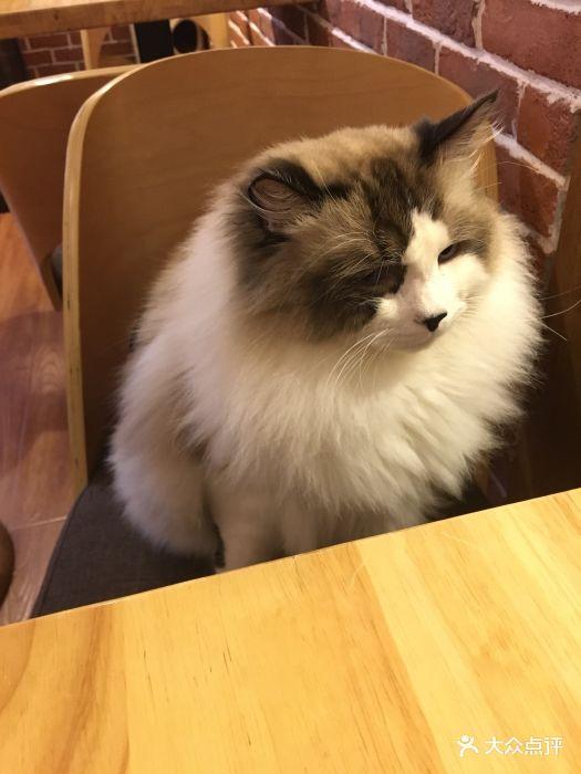贝斯特猫咪咖啡馆图片 - 第926张