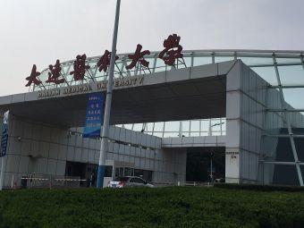 中国导盲犬大连培训基地