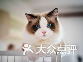 作作de猫舍&名猫(莘庄店)