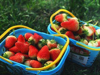 喻口古镇奶油草莓采摘园