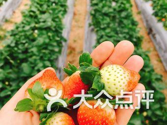 小凌草莓园