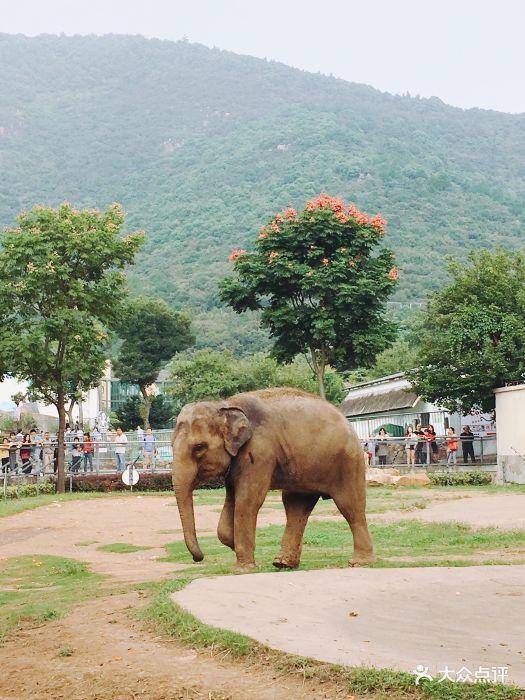 无锡动物园·太湖欢乐园景点图片 - 第61张