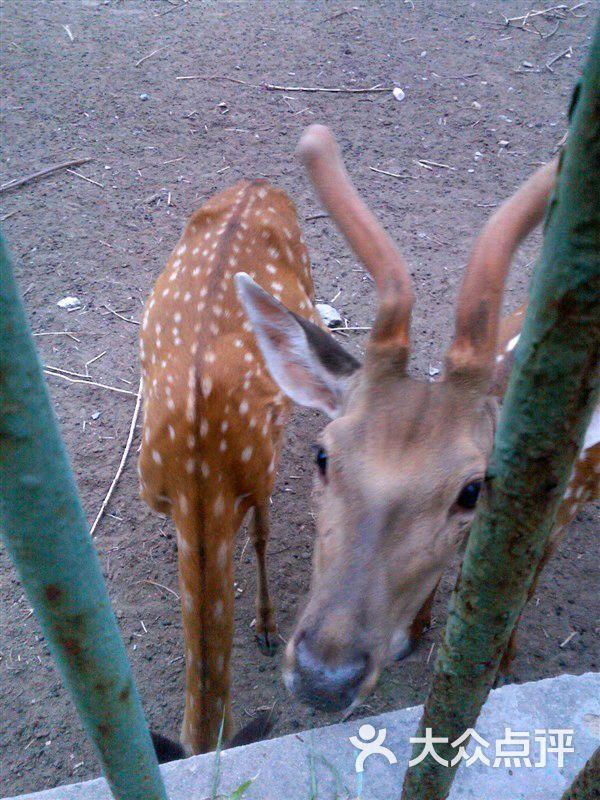 临汾市动物园图片 - 第61张