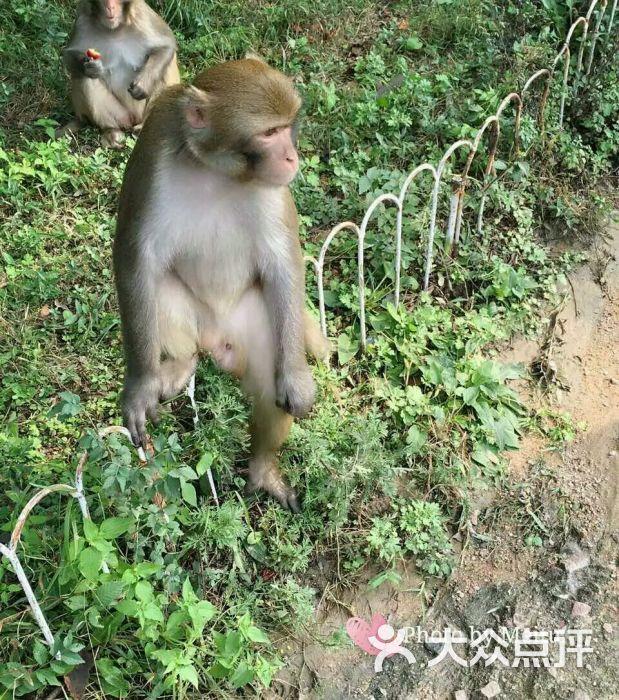 八达岭野生动物园图片 - 第5张