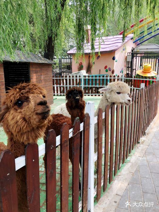 朝阳公园亲子动物园图片