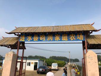 涟水县昀润家庭农场葡萄采摘园