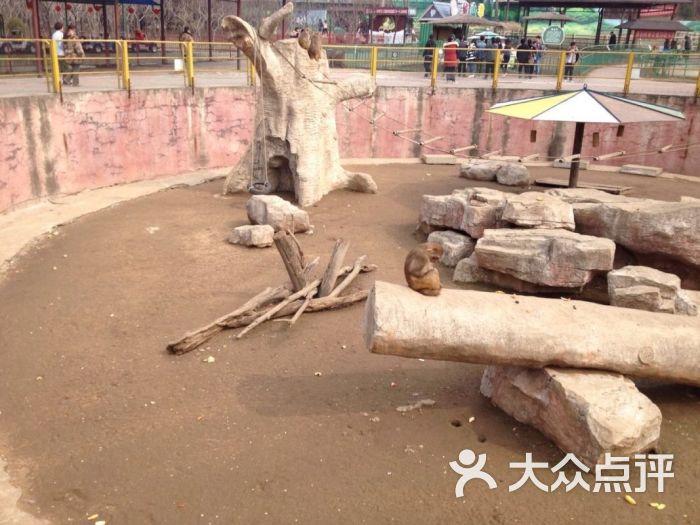 沈阳森林动物园棋盘山动物园图片 - 第5张
