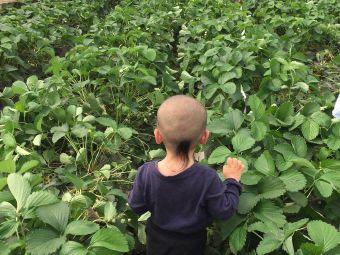 乡之味草莓园