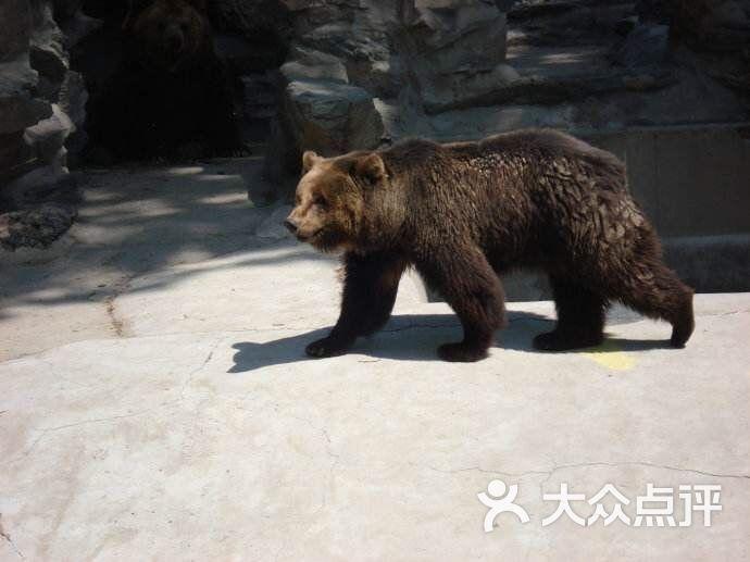濮阳市中心动物园图片 - 第4张
