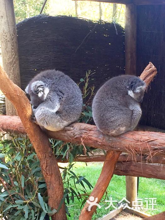 巴拉瑞特野生动物园-图片-墨尔本景点