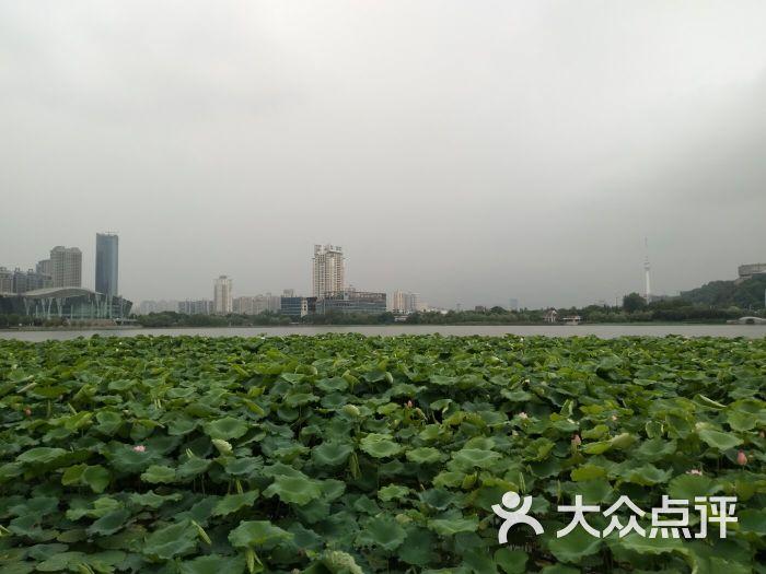 月湖风景区-景点图片-武汉周边游-大众点评网