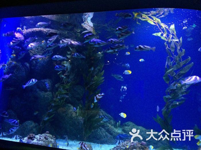 海滨城浩海立方海洋馆攻略-第3张赚钱盘图片网图片