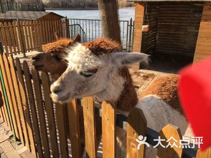 朝阳公园亲子动物园图片 - 第6张
