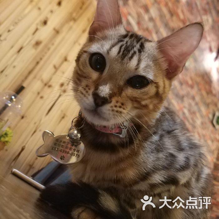 坨坨猫咖啡厅