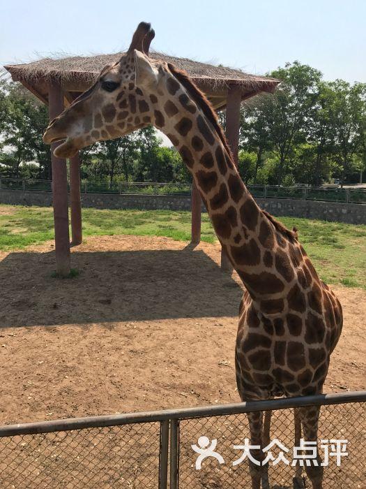 石家庄动物园-图片-鹿泉区周边游-大众点评网