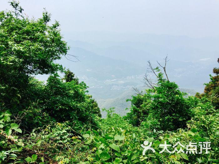 莫干山风景区-图片-莫干山周边游-大众点评网