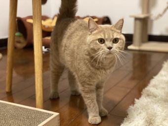 Meow Loft貓樂家庭式猫咪寄养