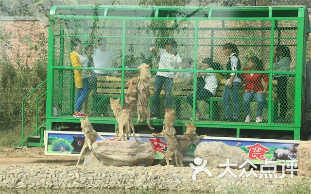 五龙山响水河野生动物园-团购图片图片-辉县市景点