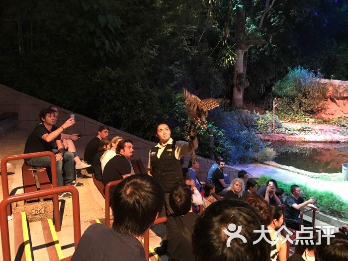 夜间野生动物园-night safari show图片-新加坡景点