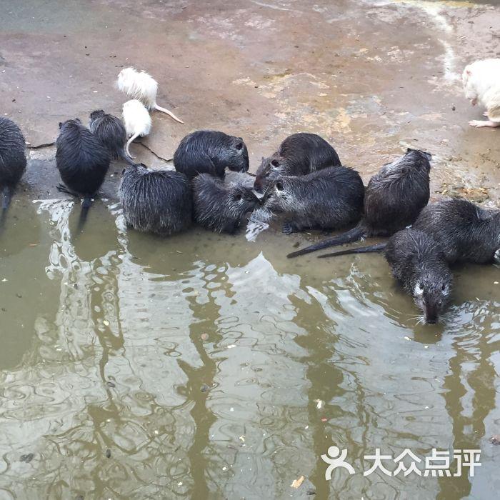 上海动物园图片 - 第45张