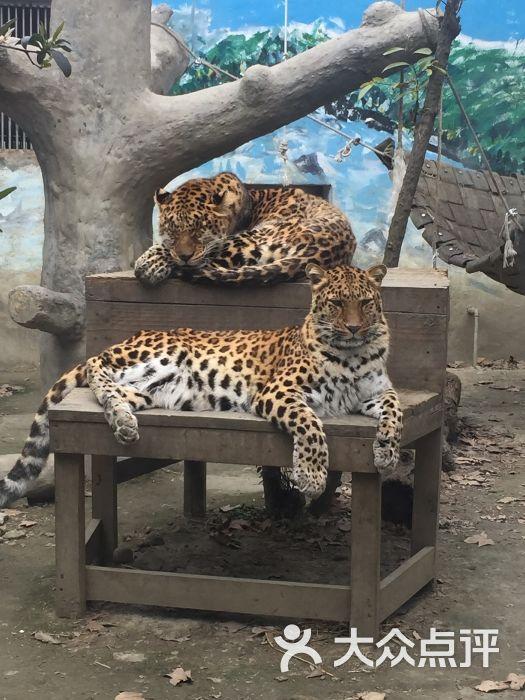 成都动物园景点图片 - 第4张