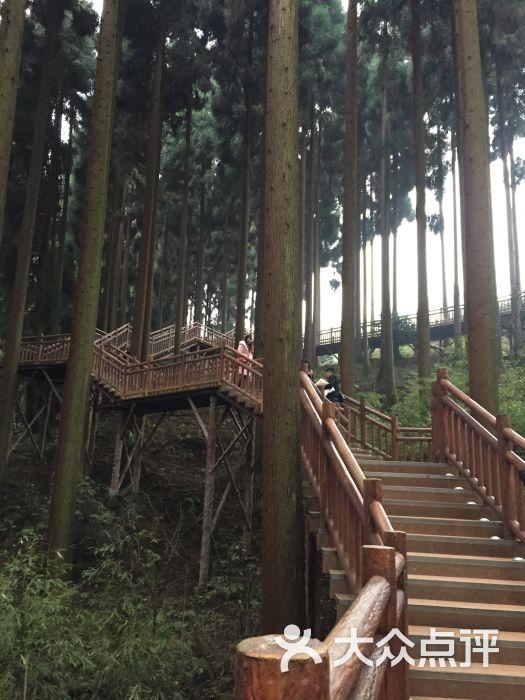 峨眉山七里坪森林栈道景区-图片-洪雅县周边游-大众