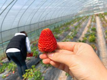 南山草莓园