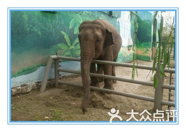 棋盘山动物园-图片-沈阳景点-大众点评网