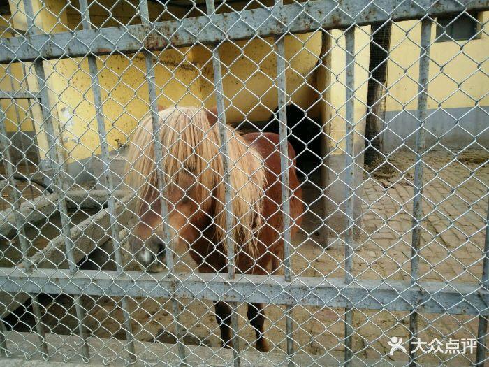 渭滨公园动物园图片 - 第41张