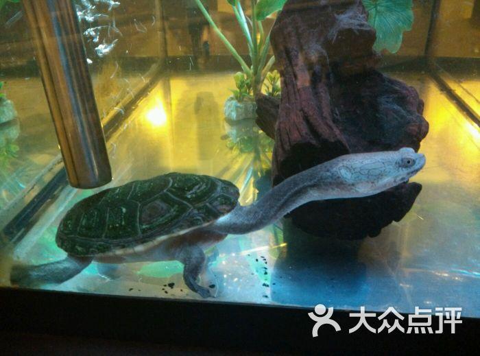 中国古动物馆图片 - 第686张