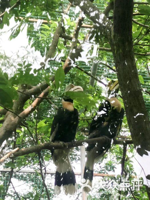 东莞寮步香市动物园图片 - 第258张