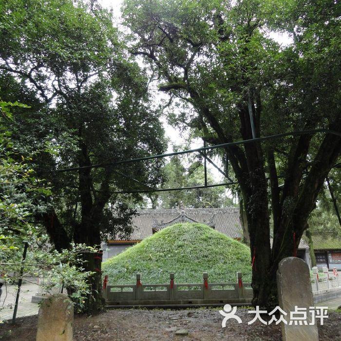 武侯墓千年桂花树图片-北京名胜古迹-大众点评网