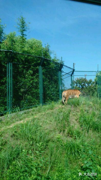 长沙生态动物园图片 - 第48张