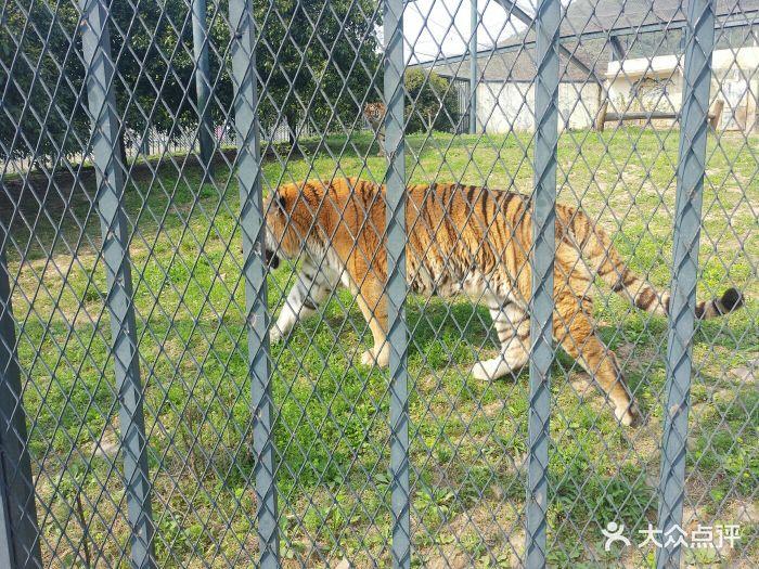 无锡动物园·太湖欢乐园景点图片 - 第43张