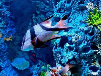 大堡礁水族館