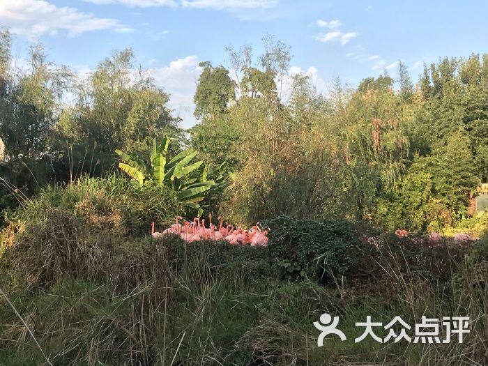 南昌新动物园图片 - 第8张