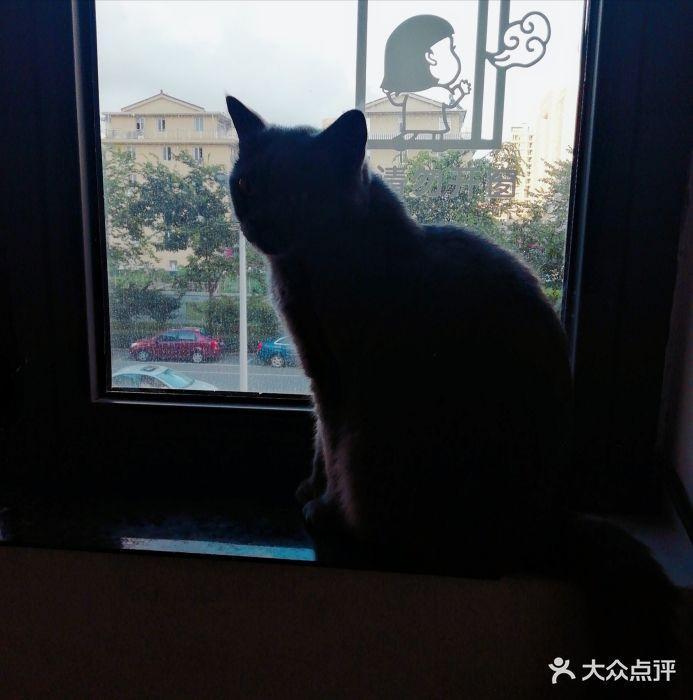 壁纸 动物 狗 狗狗 猫 猫咪 小猫 桌面 693_700