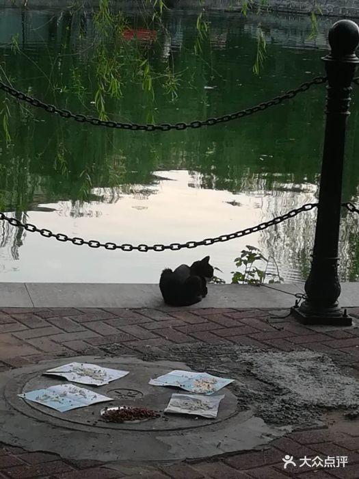 黄村儿童游乐园景区图片
