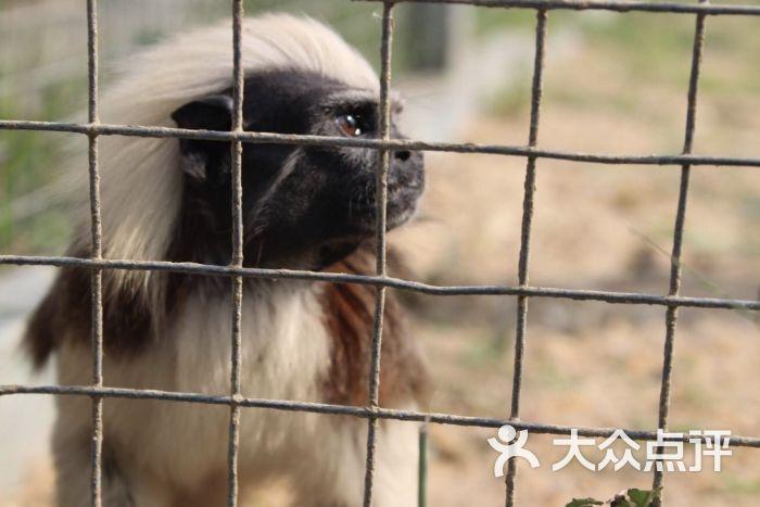 海口天鹅湖动物乐园图片 - 第49张