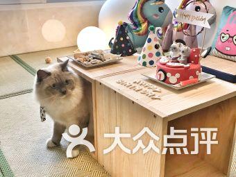猫屿假日精选猫咪寄养酒店