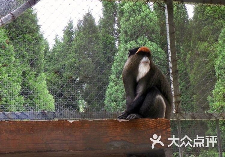 阜阳生态园动物园图片 - 第16张