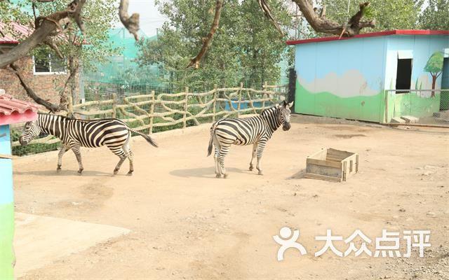 五龙山响水河野生动物园团购图片图片 - 第12张