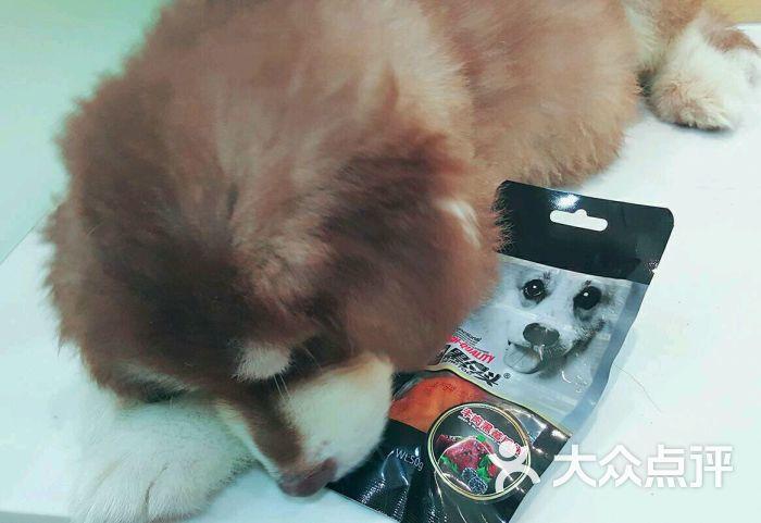 芭比堂动物医院(北京天懿然分院)-图片-北京宠物